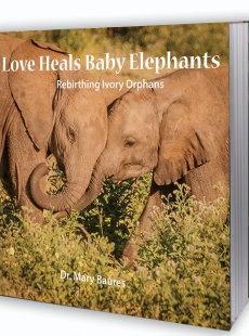 love heals baby elephants