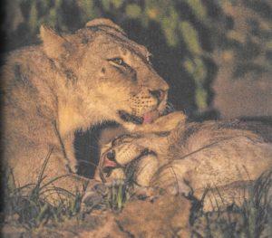 Love Heals Baby Elephants